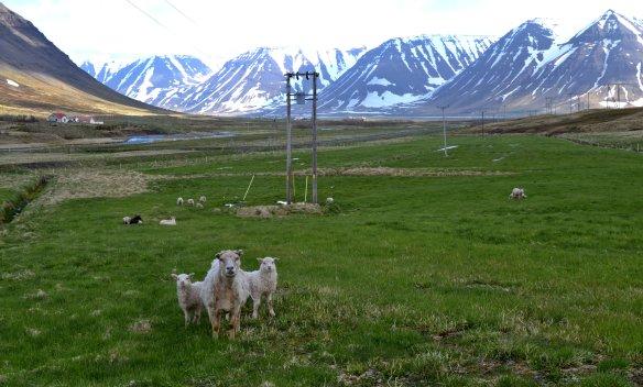 Önundarfjorður03